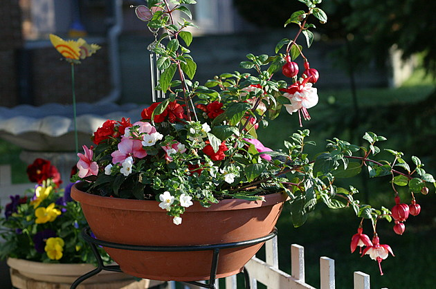 Container Gardening Tips For All Minnesotanu2019s
